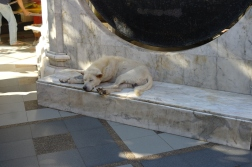 Sleepy dog at the Doi Sotep Temple