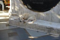 Sleepy dog at the Doi Sotep Temple