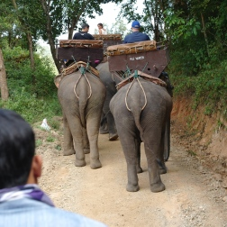 Rear of an elephant