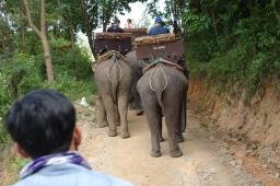 Rear of an elephant