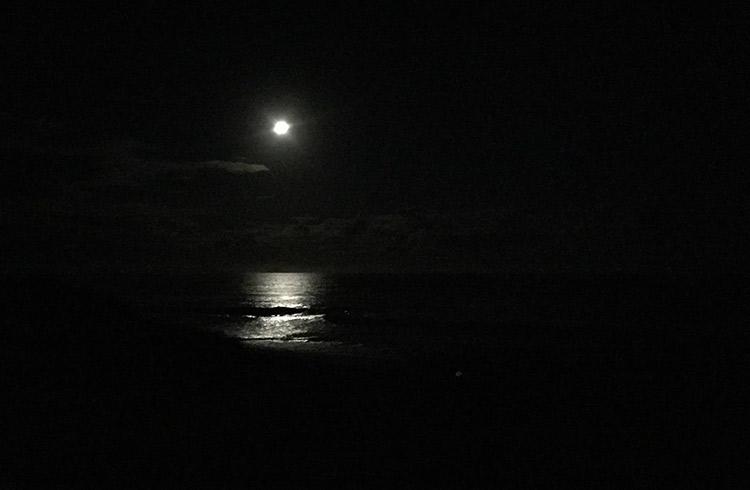 night-hawksnest