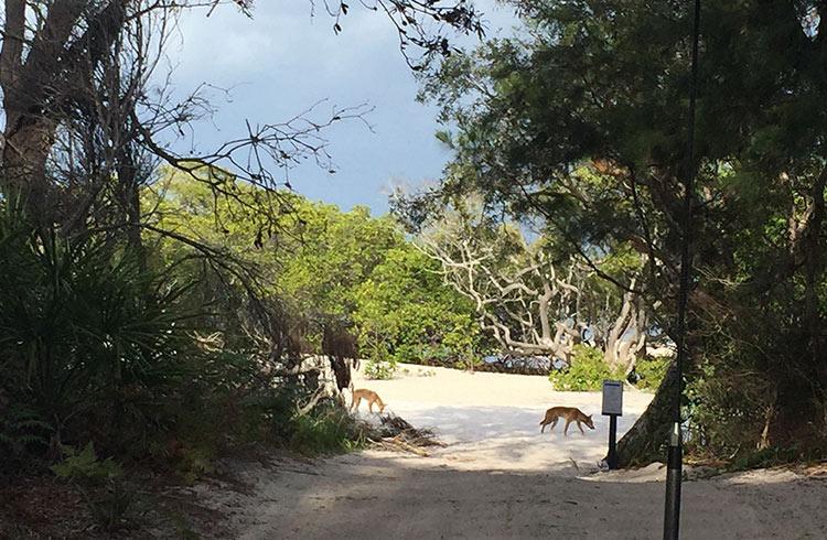 dingoes-wathumba-creek