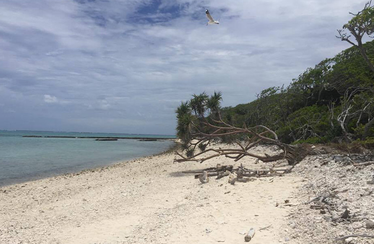 lady-musgrave-island-tour