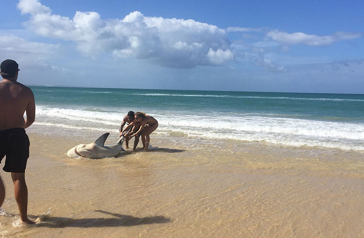 shark-fisherman-waddy-point-fraser-island