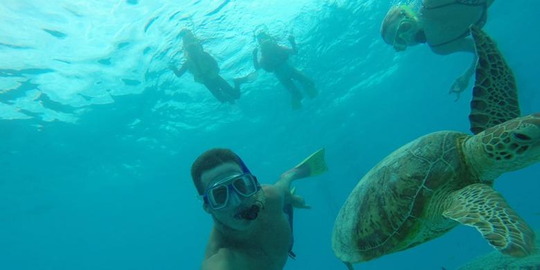 turtle-selfie-lady-musgrave-island