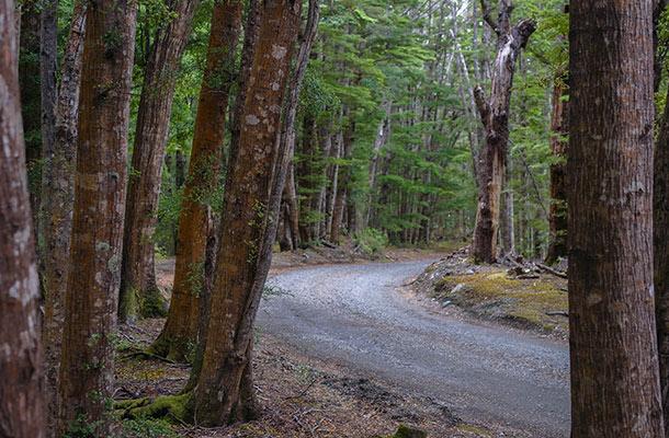 henry-creek-road