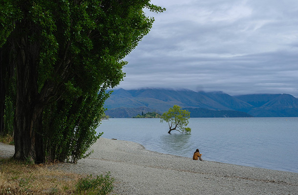 random-lake-wanaka-tree