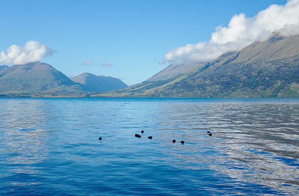 lake-wakatipu-duckies