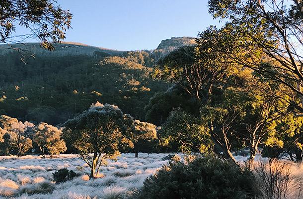 frosty-morning-thredbo-camping