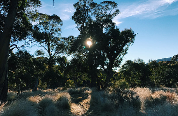 walks-near-thredbo-diggings