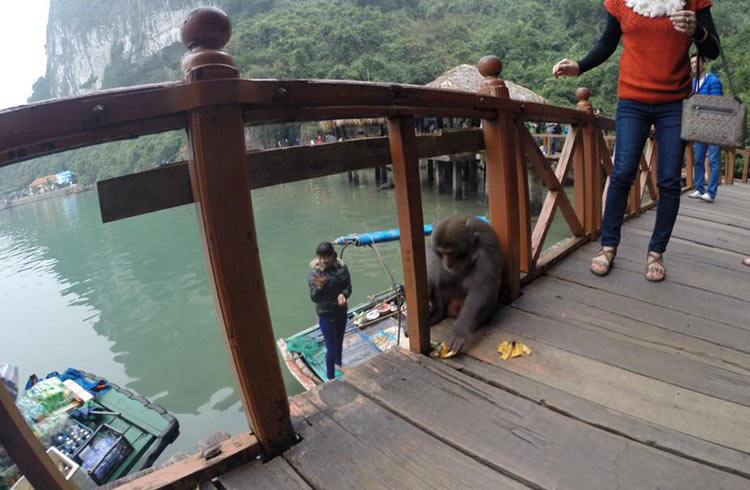moneky-punched-woman-halong-bay