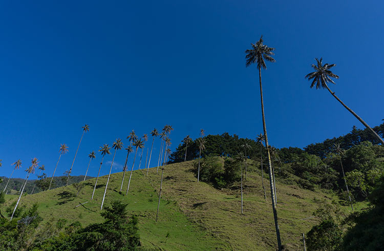 colombia-cocora-valley