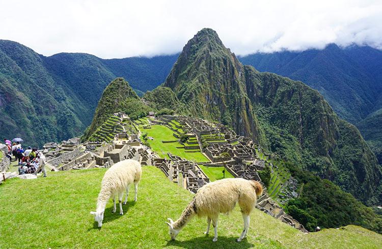 peru-machu-picchu-and-llamas
