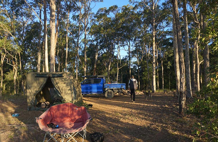 Setting up camp in the Watagans